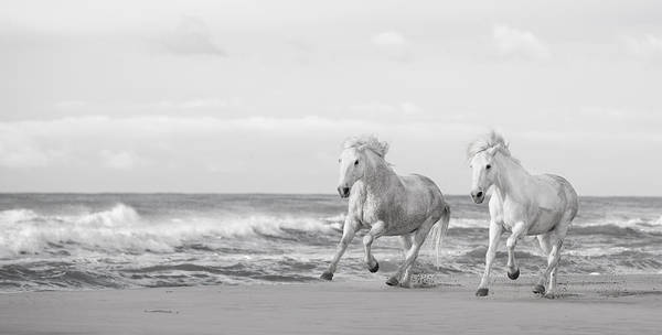 White Horse Photograph - Run White Horses Vi by Tim Booth