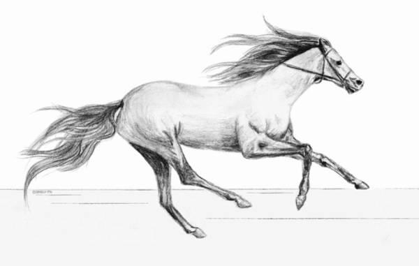 Drawing - Runaway by Sophia Schmierer