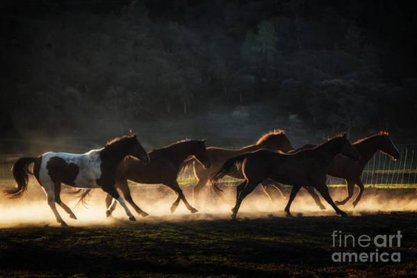 Photograph - Running by Ana V Ramirez