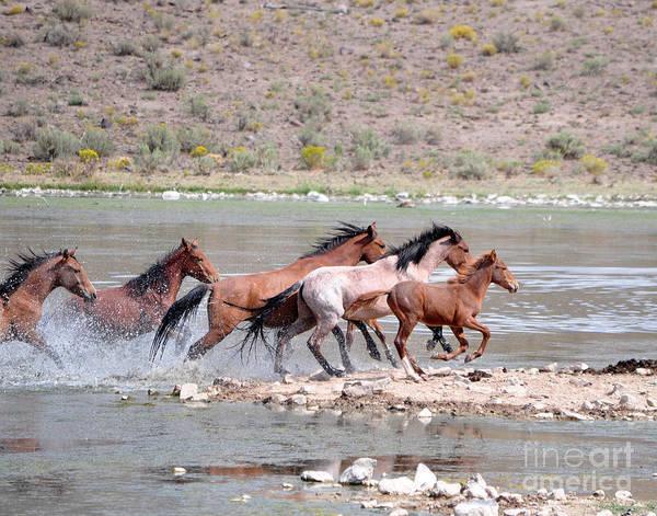 Photograph - Running And Splashing by Lula Adams