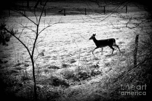 Photograph - Running Deer by Cynthia Mask