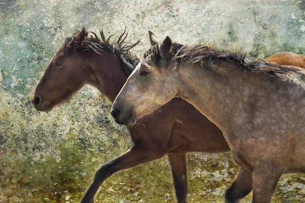 Running Free - Pryor Mustangs Art Print