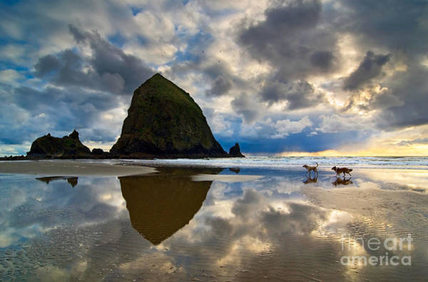 Cannon Beach Photograph - Running Free - Dogs Running In Beautiful Cannon Beach. by Jamie Pham