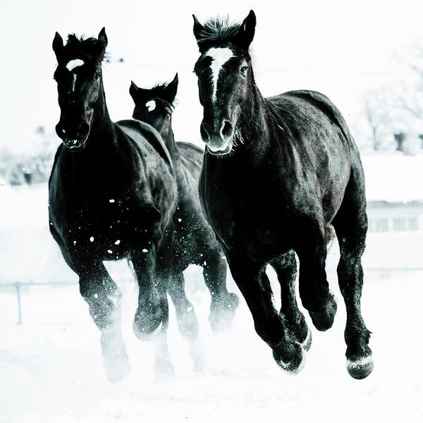 Snowfield Photograph - Running Horses by Makieni's Photo