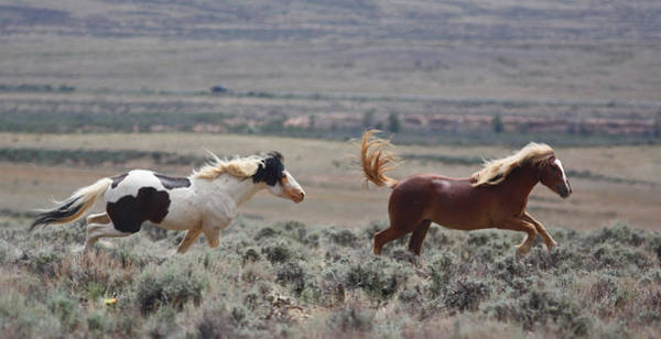 Photograph - Running Mustangs by Jean Clark