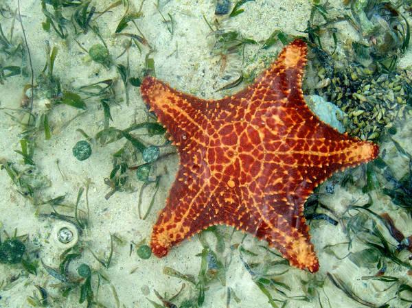 Photograph - Running Starfish by Mary Lee Dereske