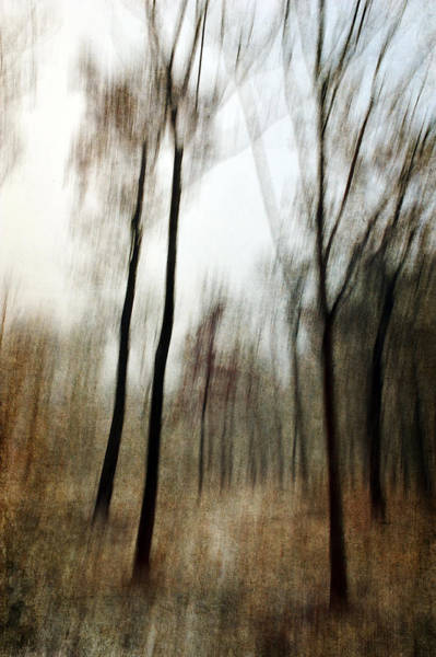 Photograph - Running Through The Woods by Randi Grace Nilsberg