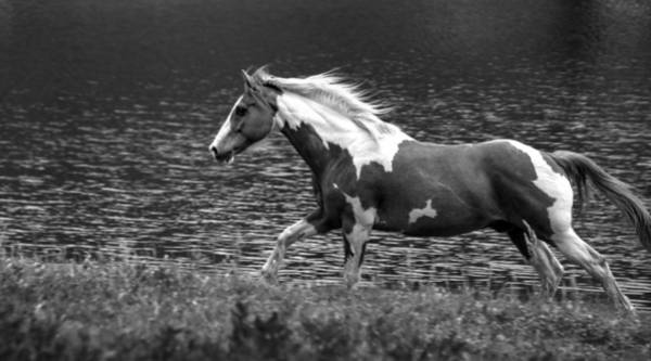 Photograph - American Paint Horse by Philip Rispin