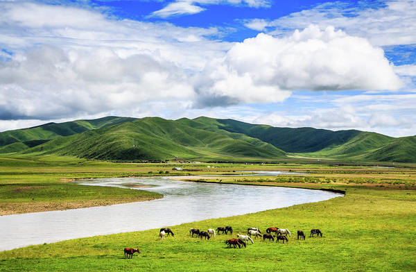 Herd Of Horses Wall Art - Photograph - Ruoergai Grassland, Sichuan, China by Feng Wei Photography