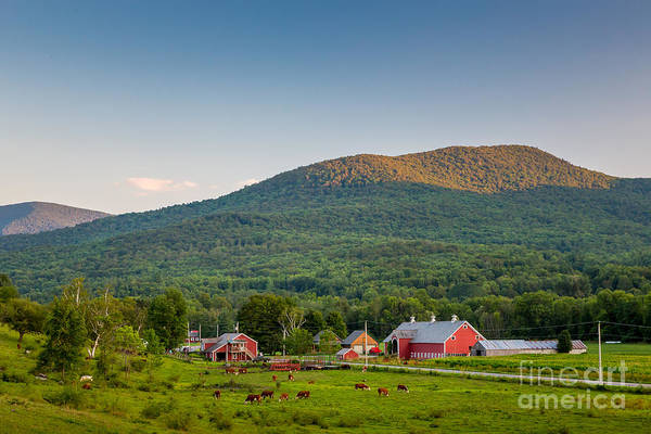 Photograph - Rupert Red Farm by Susan Cole Kelly