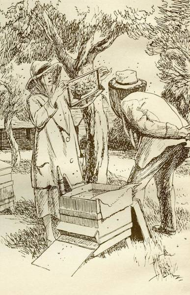 Honey Photograph - Rural Beekeeping In The Early Twentieth Century.  From Windfalls By Alpha Of The Plough, Published by Bridgeman Images
