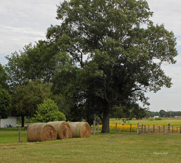 Summertime Wall Art - Photograph - Rural Indiana Scenic - Carroll County by Suzanne Gaff