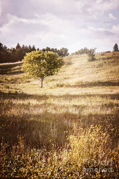 Wall Art - Photograph - Rural Landscape With Single Tree by Elena Elisseeva