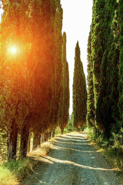 Vertical Perspective Photograph - Rural Road Lined With Cypress Trees by Walter Zerla