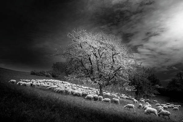Herd Photograph - Rural Scene by Rasto Gallo