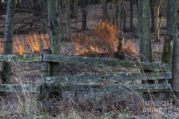 Wall Art - Photograph - Rural Scene With Fence And Forest by William Kuta
