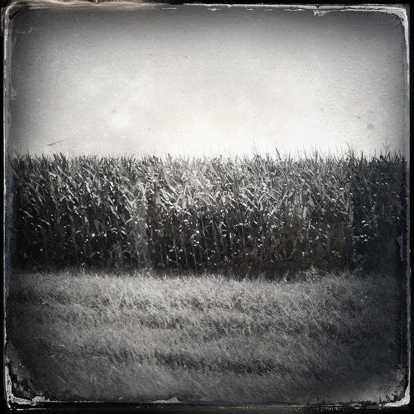 Photograph - Rural Triptych by Natasha Marco