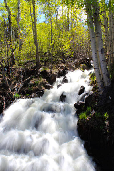 Photograph - Rushing Water by Shane Bechler
