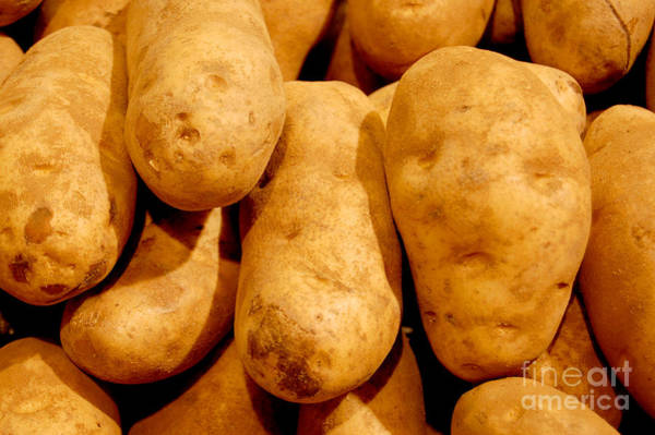 Photograph - Russet Potatoes by Staci Bigelow