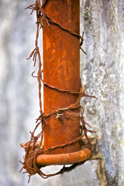 Wire Wrap Photograph - Rusted Barbed Wire  by David Letts