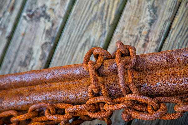 Chain Link Photograph - Rusted Chained by Karol Livote