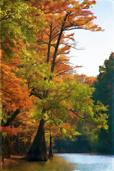 Bald Cypress Wall Art - Digital Art - Rustic Autumn by Lana Trussell