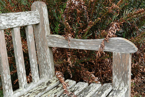 Photograph - Rustic Bench At Butchart Gardens In Victoria by Rob Huntley