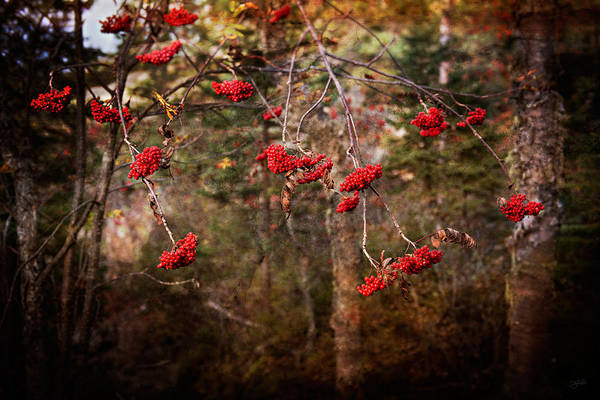 Photograph - Rustic by Doug Gibbons