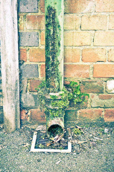 Canalization Photograph - Rusty Drainpipe by Tom Gowanlock
