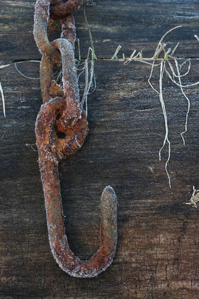 Photograph - Rusty Harness Chain On Log With Frost by Daniel Reed