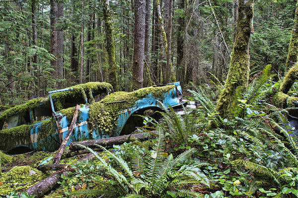 Photograph - Rusty Old Car In The Forest by Peggy Collins