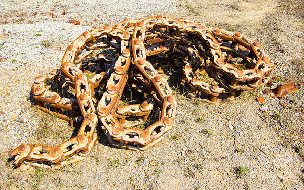 Photograph - Rusty Snake by Les Palenik