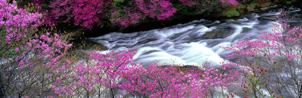 Whitewater Falls Photograph - Ryuzu Falls Tochigi Japan by Panoramic Images