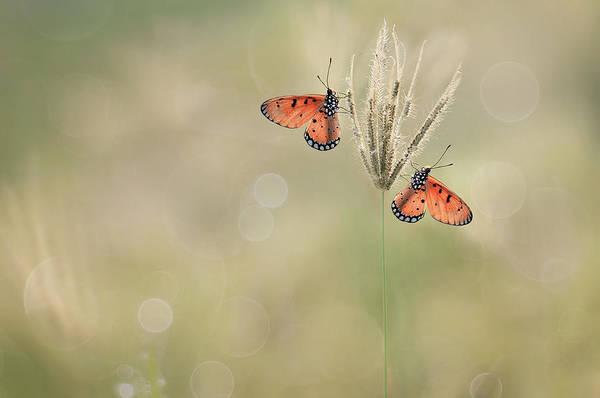 Butterfly Photograph - Saat Indah Bersamamu by Edy Pamungkas