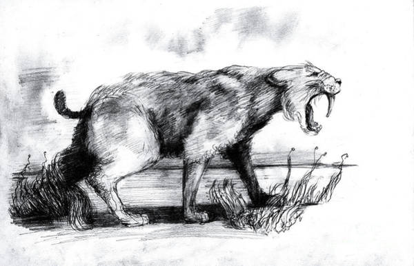 Smilodon Wall Art - Photograph - Saber-toothed Cat by Spencer Sutton