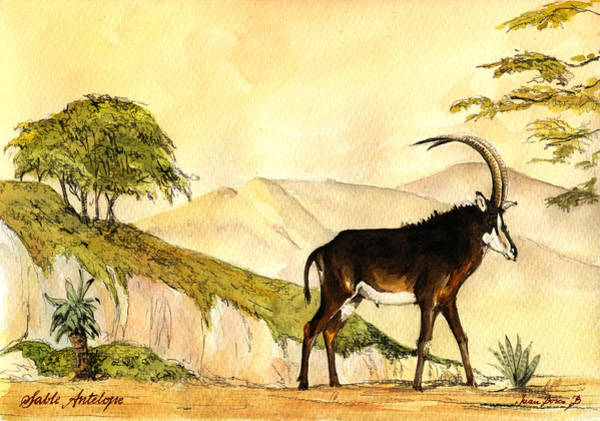 Antelope Wall Art - Painting - Sable Antelope by Juan  Bosco
