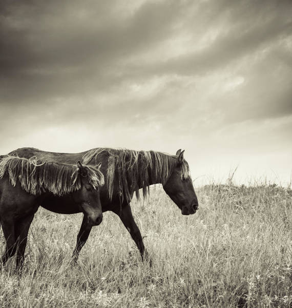 Cloudscape Photograph - Sable Island Horses by Jewelsy