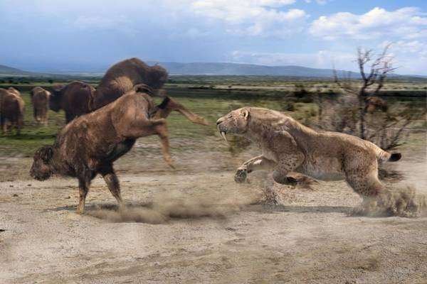 Wall Art - Photograph - Sabre-toothed Tiger by Roman Uchytel/science Photo Library