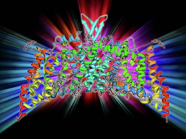 Bacilli Wall Art - Photograph - Saccharide Transport Protein by Laguna Design