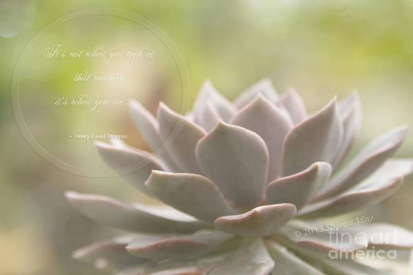 Photograph - Sacred Garden by Sharon Mau