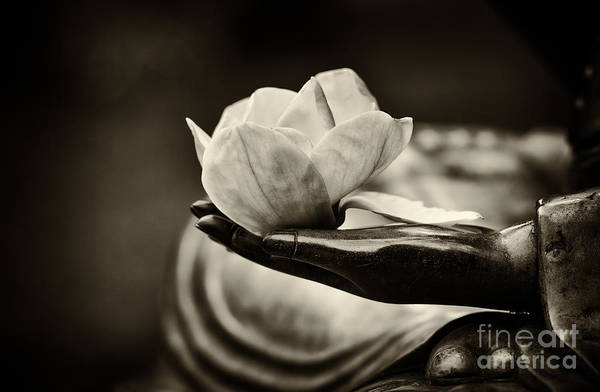 Offering Photograph - Sacred Hand  by Tim Gainey