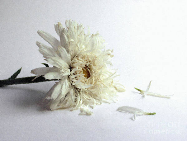 Depression Photograph - Sad Flower by Diane Diederich