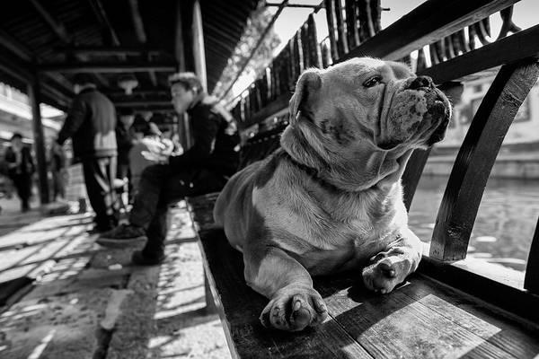Pet Photograph - Sad by Youdu,tian(???)