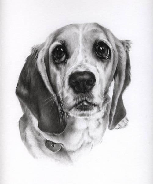 Pup Drawing - Sadie by Natasha Denger
