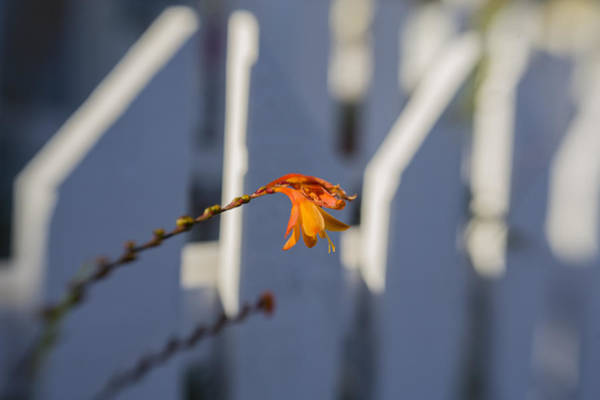 Photograph - Safe Behind The Fence by Scott Campbell