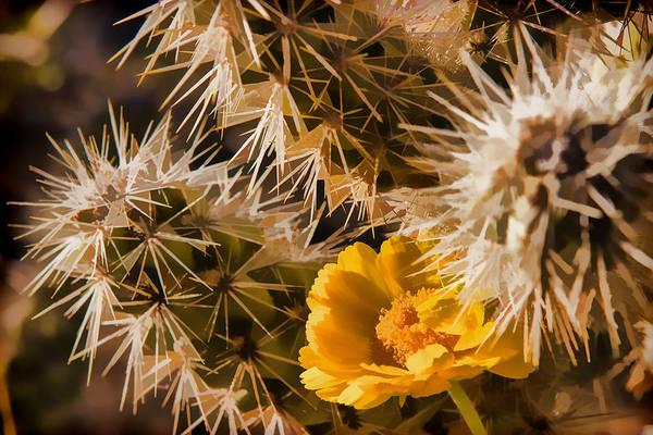 Desert Southwest Digital Art - Safe Here by Scott Campbell