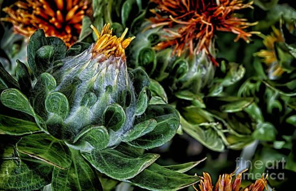 Salad Dressing Photograph - Safflower by Dee Johnson