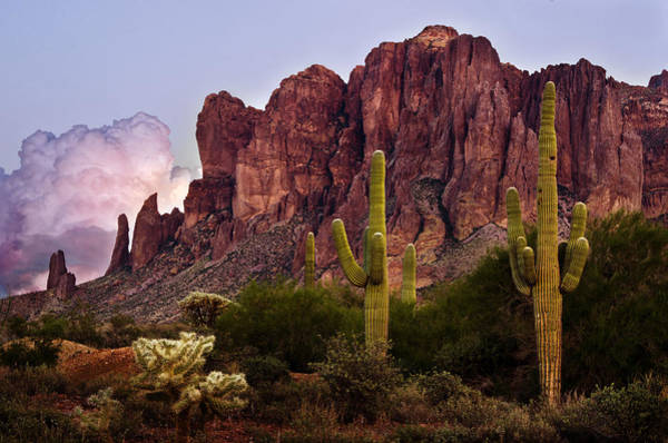 Photograph - Saguaro Cactus And The Superstition Mountains by Dave Dilli