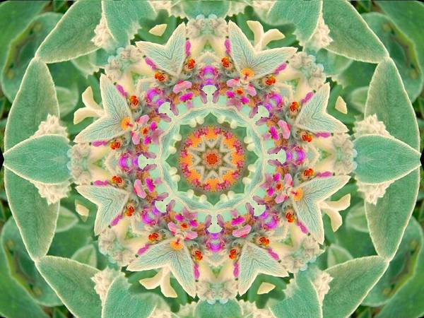 Digital Art - Sage Flower Mandala by Diane Lynn Hix