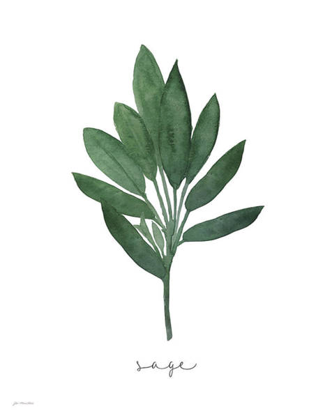 Wall Art - Painting - Sage by Jo Moulton
